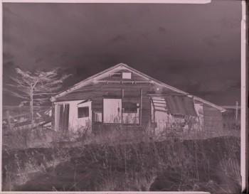 4×5判ネガフィルム 写真提供:加藤雅昭