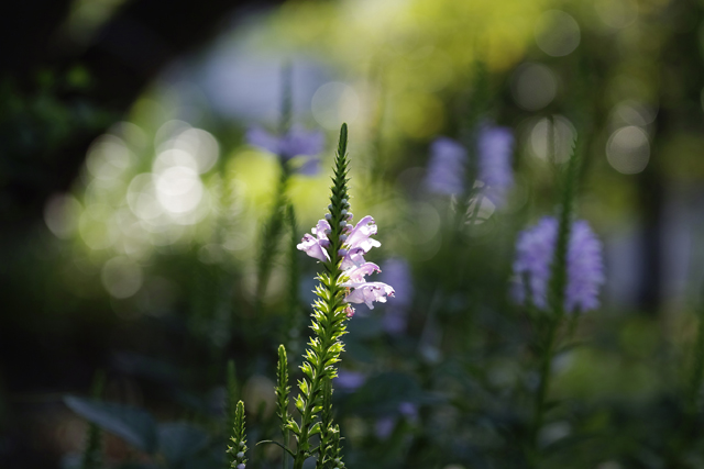おはよう、横浜。港の見える丘公園 SIGMA sd Quattro H 70mm F2.8 DG MACRO | Art f3.2 1/320sec. ISO100 WB:sun 絞り優先オート+0.3